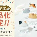 商品化してほしいとの声から実現!ロート製薬から発売予定の猫耳目薬が可愛い!
