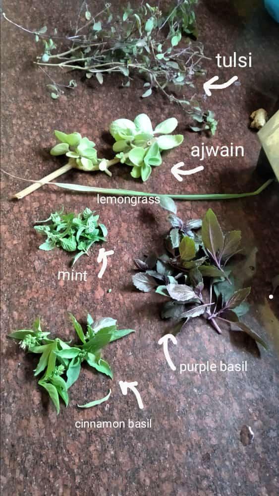 Harvest time 😁 . #terracegarden #growyourown #GoGreen #Herbs #harvest #greenindiachallenge