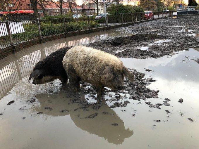 Boer Dekker in actie tegen inbeslagname kudde https://t.co/DGICHHoFhV https://t.co/TMBFrldFJi