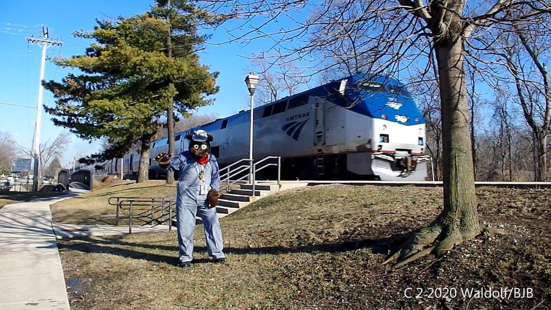 #FursuitFriday #Waldolf alongside the #BNSF #racetrack in #Brookfiled Il, with a westbound #Amtrak passing by #fursuit #fursuiter #fursuiting #bear #costume