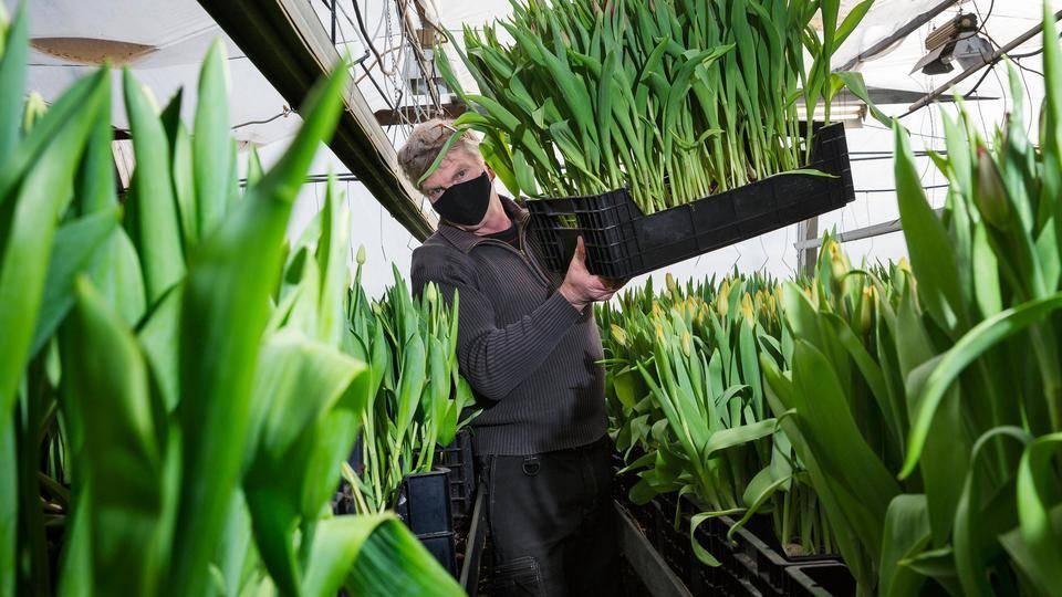 Kukkailoa miljoonan verran Vantaalta 🌷! #vantaa #tulppaanit #kukat #yrittäjyys