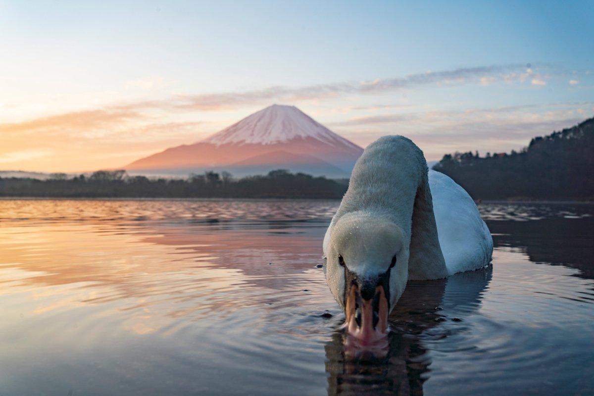 白鳥「その逆さ富士消えるよ!」(シュバババババババ)  わい「あびゃーあああああああ」