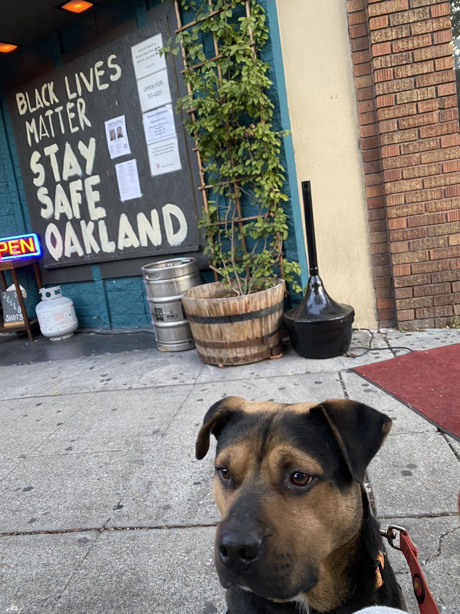 Look who made a stop at the #libertineoakland ... a dog named Echo #happyhour #BlackLivesMatter #oakland #lakemerritt