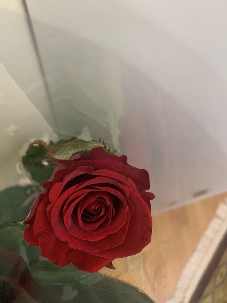 """""""Du bist so schön wie eine Rose."""" #vsco #beauty #beautiful #love #flower #gorgeous #german"""