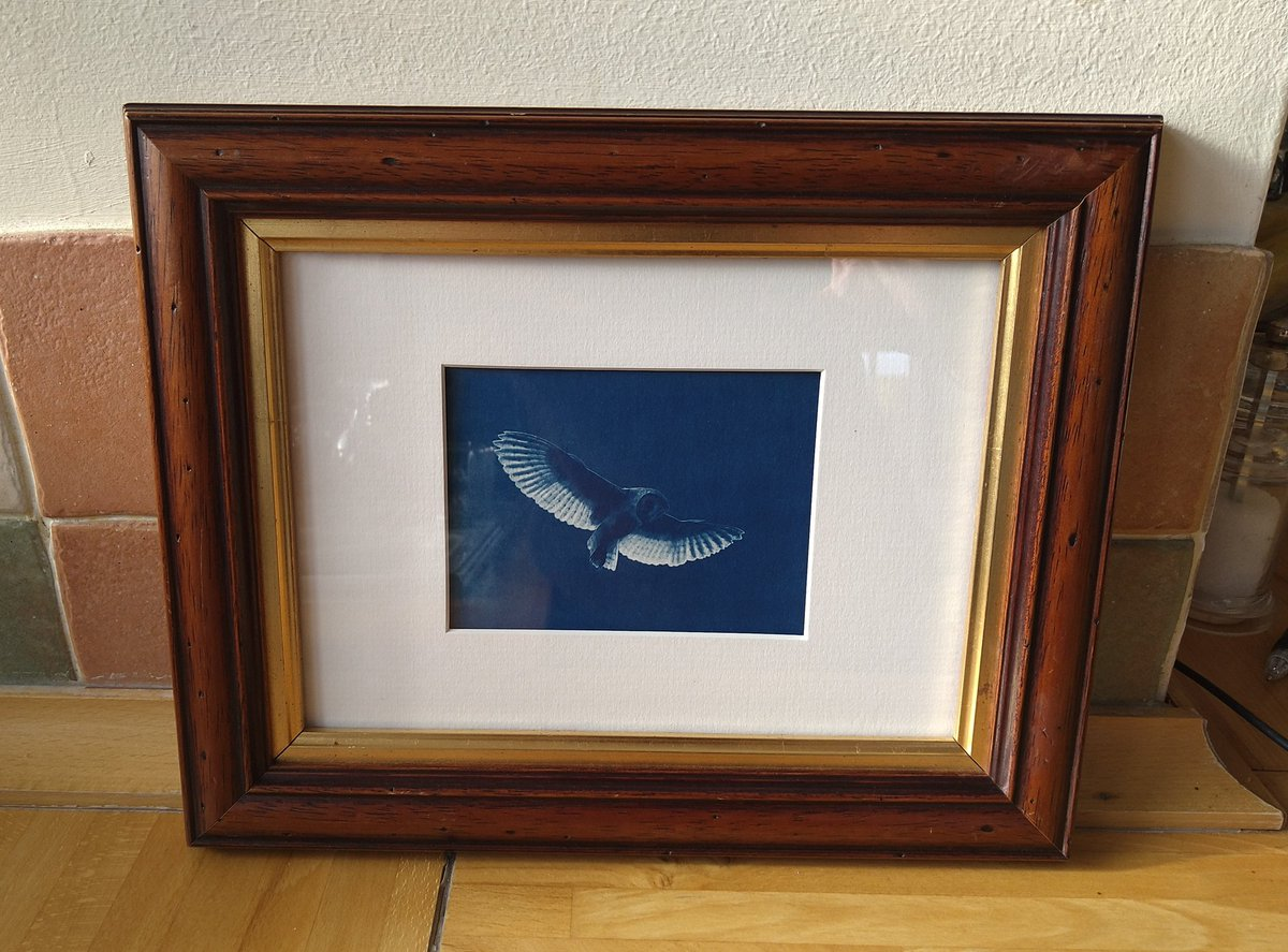 Finally got round to framing up this small barn owl cyanotype I made about 2 years ago...🤣 #cyanotype #cyanotypeprint #blueprint #cyanotypeartist #experimentalphotography #art #printmaking #printsforsale #uniqueart #blue #landscape #handprinted #smallbusiness #alternativeprocess
