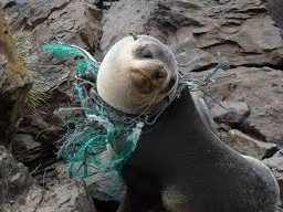 Did you like it? It's our fault Please pick up the trash and throw it in garbage can Give a Hand! For a Better World! #nature #trash #garbage #animals #plogging #ocean #beach #plogolution
