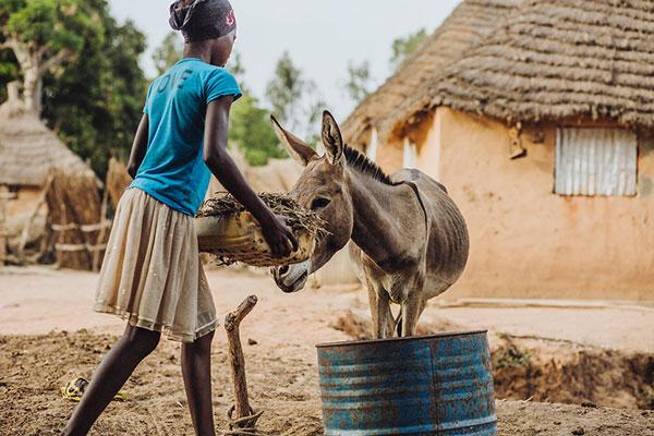 Nice mobile enabled website with a clear call to action for #Legacies THE DIFFERENCE YOUR GIFT COULD MAKE Imagine a world where working horses, donkeys and mules are free from suffering – with a gift in your Will you can help build this brighter future.