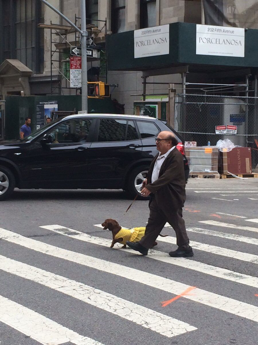 i just want to remind you guys of these photos of danny devito walking his dog