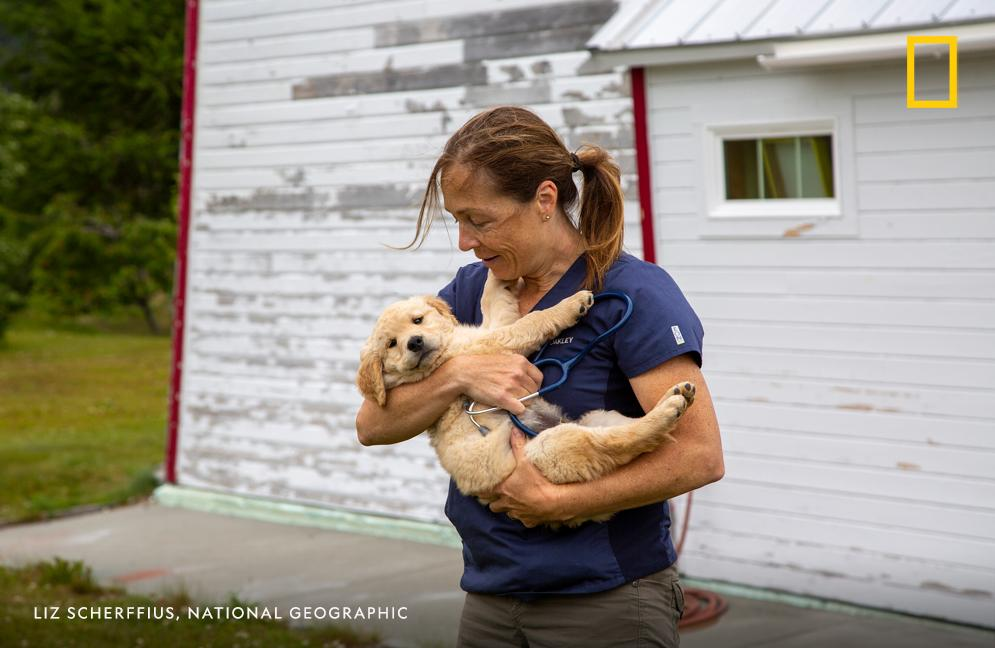 Dr. Michelle Oakley holds a golden retriever puppy. DR. OAKLEY YUKON VET follows Dr. Michelle Oakley as she makes house calls across thousands of square miles in the Yukon in northern Canada and Alaska