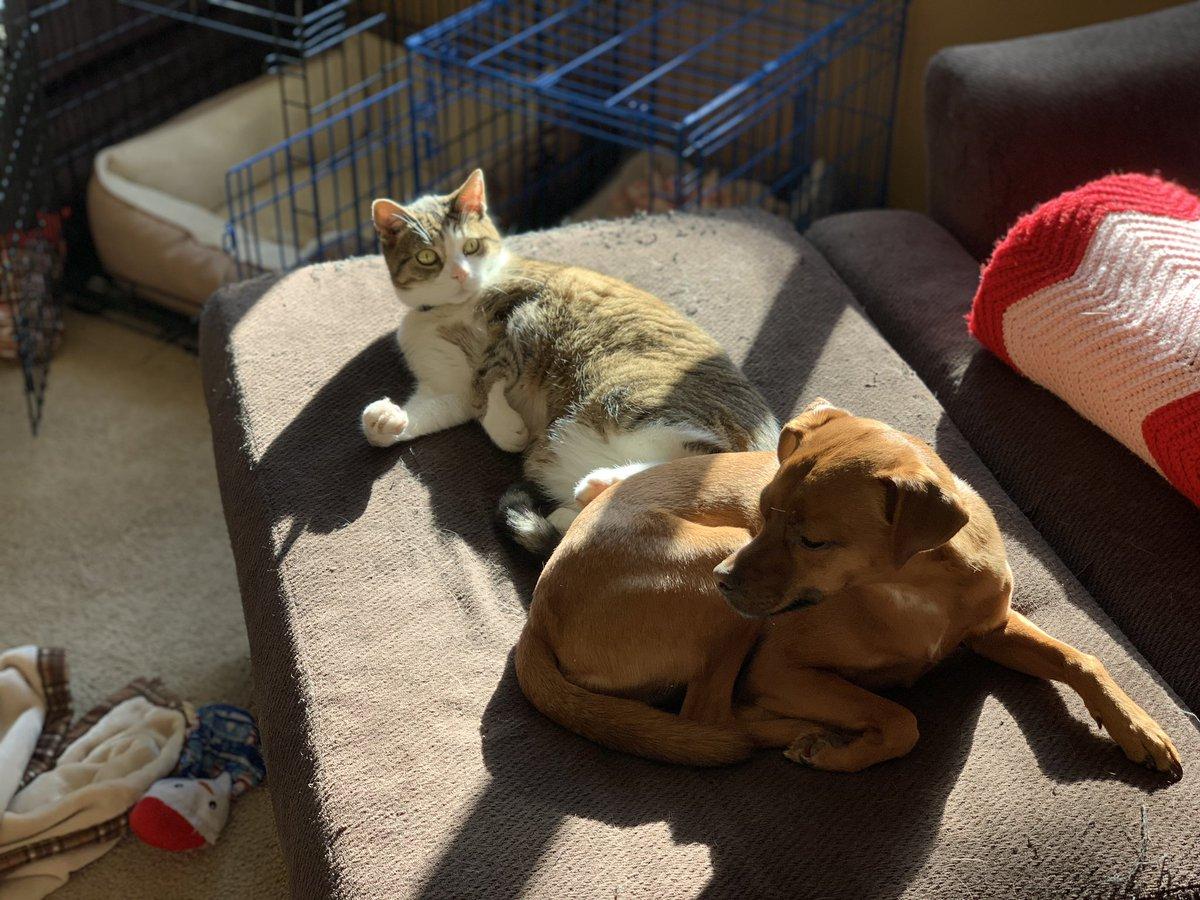 Sun spot #DogsofTwittter #CatsOfTwitter #SundayMorning