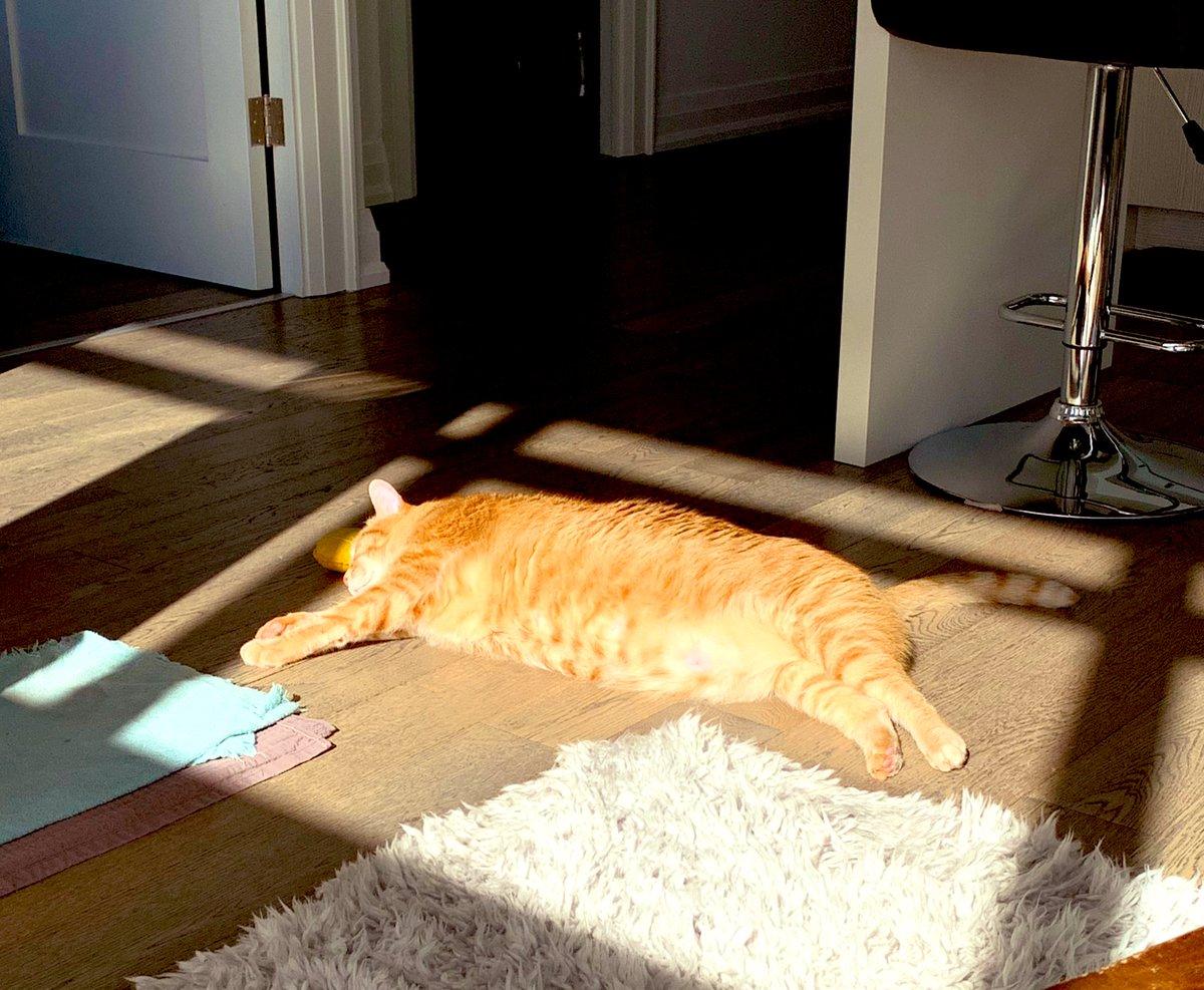 #SundayFunday 🙌🏻🍻🕺. #CatsOfTwitter #cats #CatsOnTwitter #catsofinstagram #cutecats #chonks #sundayvibes