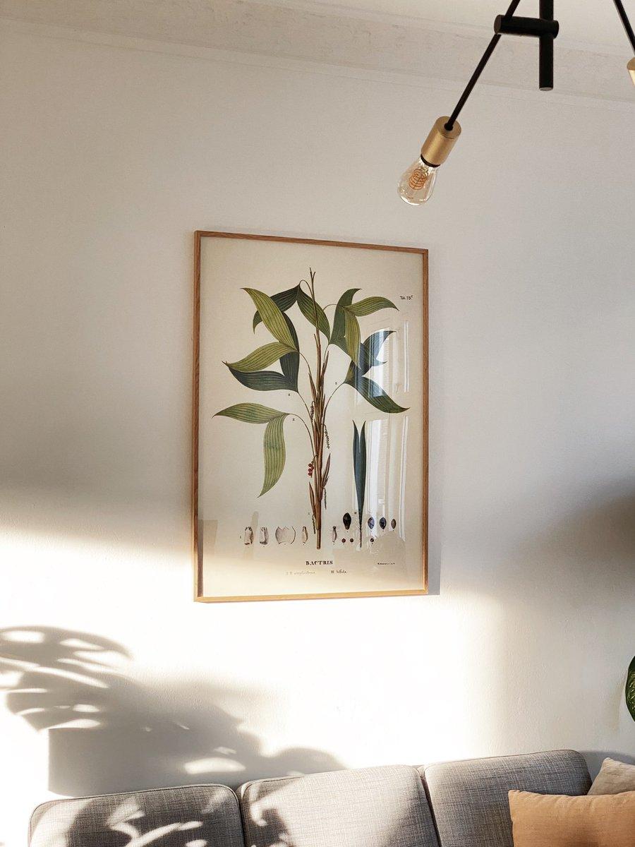 Capturing the morning sun in the apartment • #vsco #apartmenttherapy #interiordesign #houseplants #aarhus #denmark