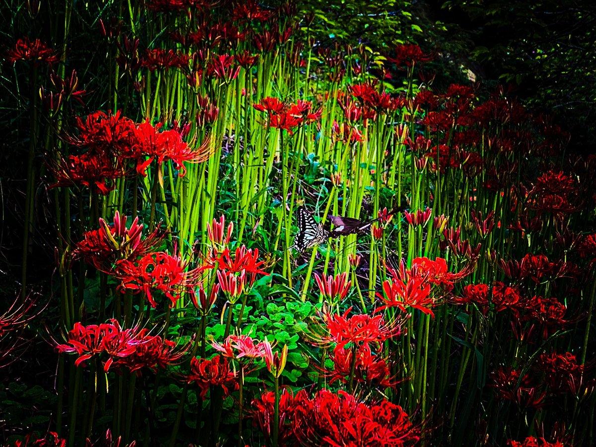 「ランデブー」  #ファインダー越しの私の世界ᅠ #キリトリセカイ #写真好きな人と繋がりたい #カメラ好きな人と繋がりたい #写真 #photo #iPhone #レタッチ #花