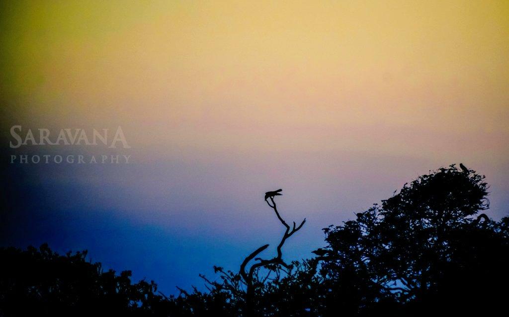 ஒரு சிறிய இடைவேளிக்கு பிறகு சந்திக்கிறேன் மக்களே. பெருசா யாரும் மிஸ் பண்ண மாட்டிங்க😜 இருந்தாலும் சொல்ல வேண்டிய கடமைக்கு👋👋👋👋👋👋👋👋👋 🚶🚶🚶🚶🚶🚶🚶🚶🚶 #ClicksfromSk #PhotoOfTheDay #naturephotograpahy #photo