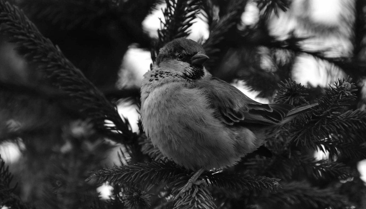 #Bird #blackandwhite #monochrome #photo #photography #picture #image