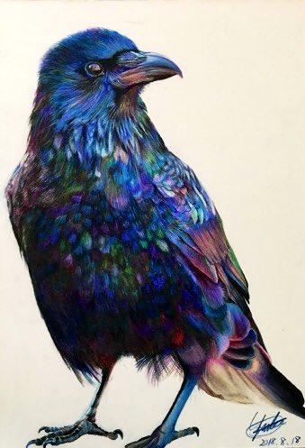 ワタリガラス 完成です…!  かかった時間は11時間くらい。 使った画材は色鉛筆のみ。  濡れ羽色ってやつを表現したかった  #色鉛筆 #drawing  #絵描きさんと繋がりたい