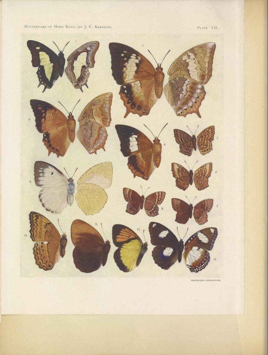 Butterflies of Hongkong -1907- ~  #fungi #butterflies #birds #nature #book #archive #scientificillustration