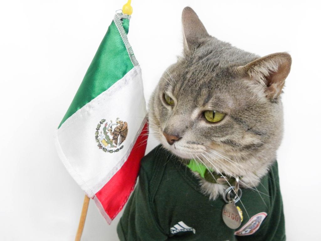 Happy Flag Day (in MX)! 🇲🇽 P.S. I needed a nap 😹 - ¡Feliz Día de la Bandera (en MX)! 🇲🇽 P.D. Necesitaba una siesta 😹 · #HugoLovesMexico #HugoAmaMexico #Mexico #DiaDeLaBandera #FlagDay #catsoftwitter #cat #weeklyfluff #iamhugo_thecat