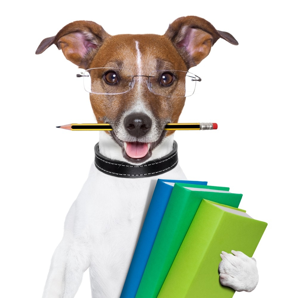 5 Tips For Training Dogs Successfully  Bseelo - Simple Pet's Necessities  Bseelo - Simple Pets Neccessities Buy your pets' stuff @  Follow, Tag, and Share.  #SundayMorning #dogslover #Cats #dogs