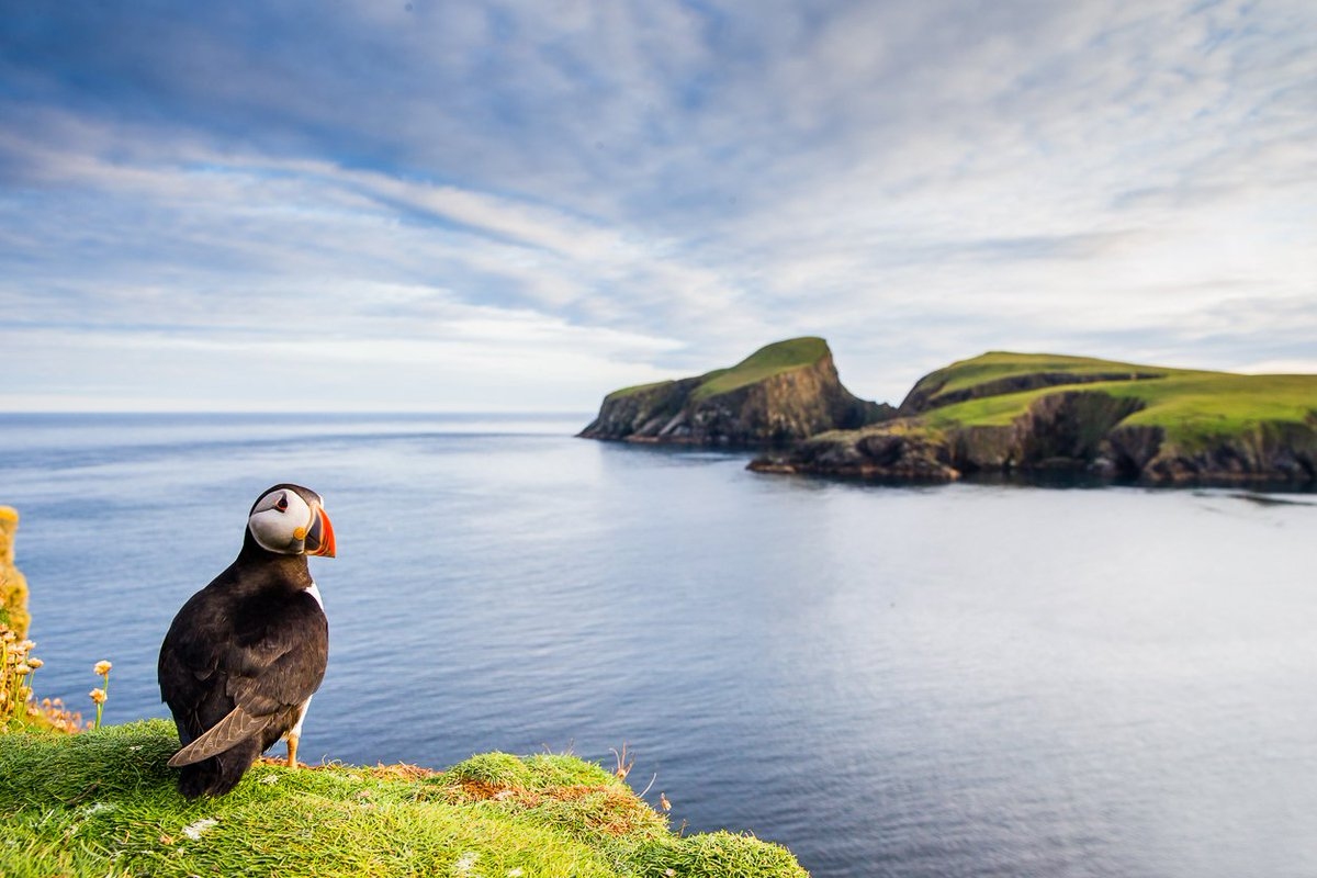 Puffin Championships - Round 3 (Habitat)  Today's selection is puffins in their environment. Once again pick your favorite (1-4) to advance to this weekend's final. Thanks so much to everyone who's taken part so far 😀😀 https://t.co/CCwkjkZp2s