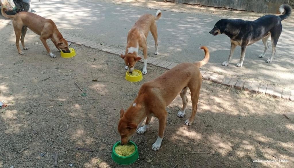 Our Day 336 of #feedingstrays in #Delhi Please look after stray animals and birds around you. #animalsarepeopletoo #onekindact #bekind #lockdownindia #unlock06