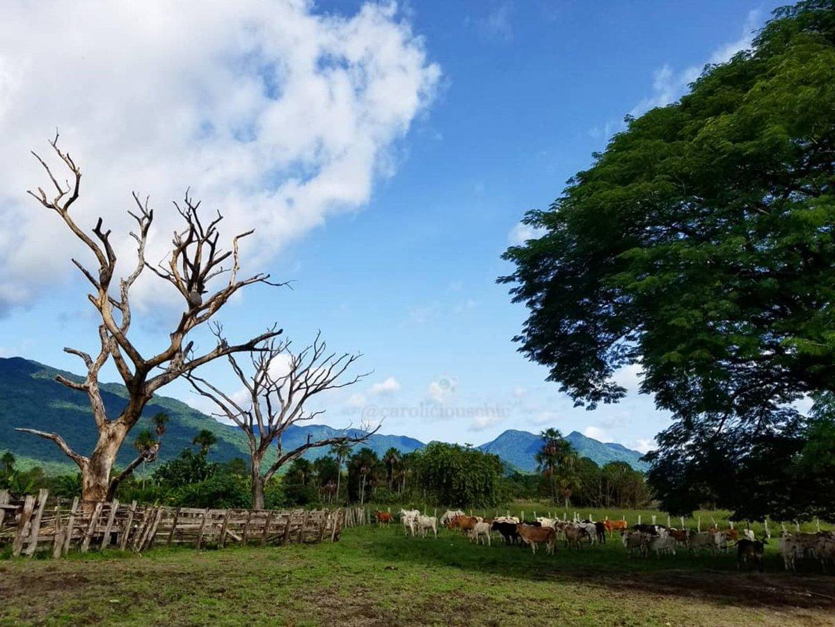 Muéstrame una #foto de tu #celular, que refleje tu misma #energía (No selfies)  #Llano #Bolívar #Venezuela #Vzla #Nature #Vacas #AmoLasVacas 🐄