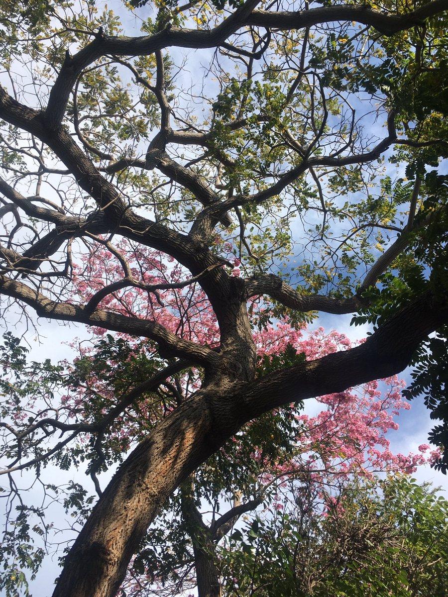 Así estuve de trepar el árbol 🌳 #fotografia #foto #NaturePhotography