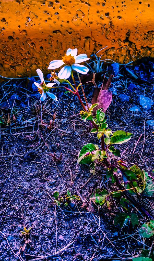 Bello es lo bello... Y lo sencillo #fotosenlacalle #foto #flor