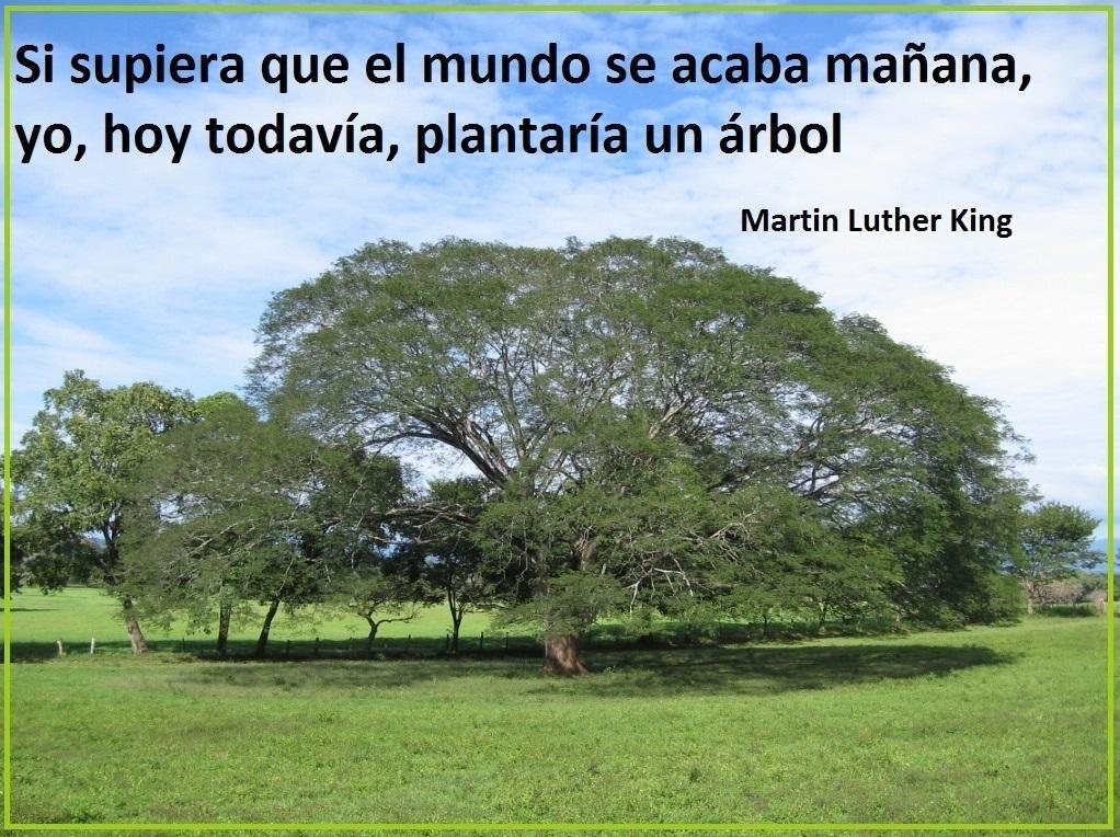 """🗓️#24Feb 2021.   """"Si supiera que el mundo se acaba mañana, yo, hoy todavía, plantaría un #Árbol"""".   #Frases ✏️ #MartinLutherKing  #Conciencia #Naturaleza  #Reflexiones  #Ideas  #Pensamientos #Citas #Cultura #Vida"""