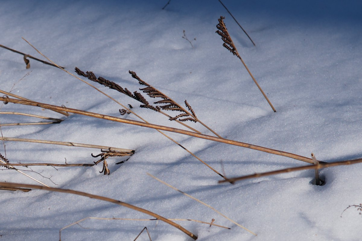 #leica #today #centralpark #snow #NewYork #nofilter #spring