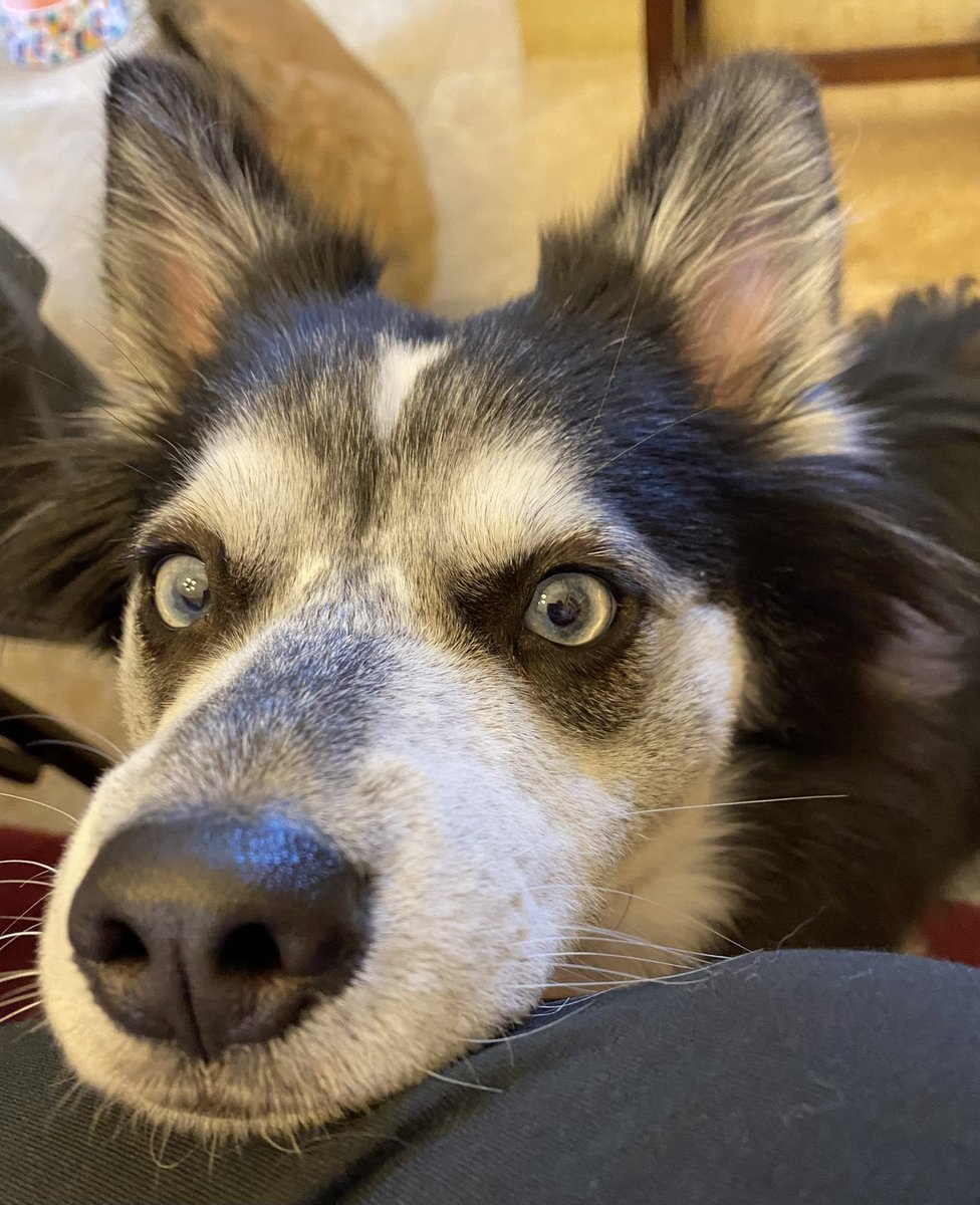 Hey! Hey, you! Are you following my mom for all the latest and greatest for our educators? If not you should hit that follow button! #dogsoftwitter #doghumor #educators #followme #barnesandnoble