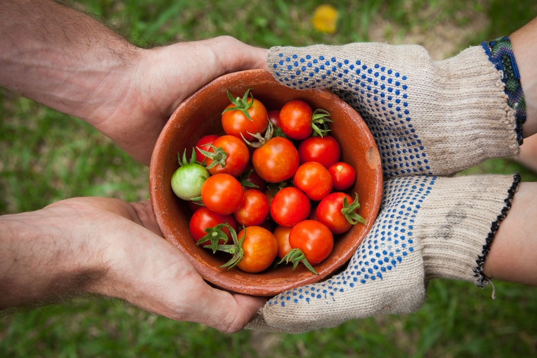 Tomato, Tomatoes,  What are you doing with your excess?   #food #foodie #yummy #healthy #delicious #nature #gardening #love #beautiful #plantalley