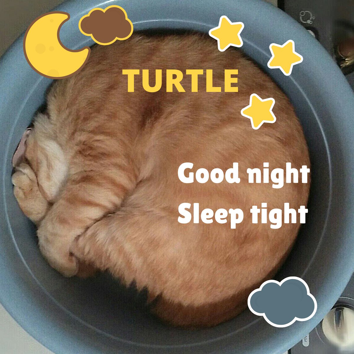 Good Dreams ......                     Conversation With Our Adorable Cats. #Caturday,#CatsOfTwitter,#CatsOnTwitter,#catlovers,#sundayvibes