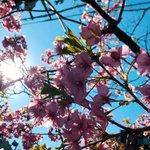 ryo_maniのサムネイル画像