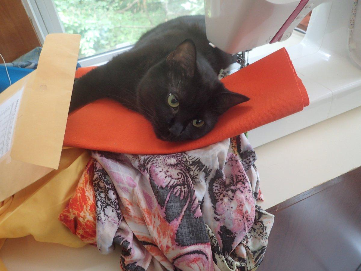 Replying to @TeaRylaks: @BitchestheCat My cat Diana