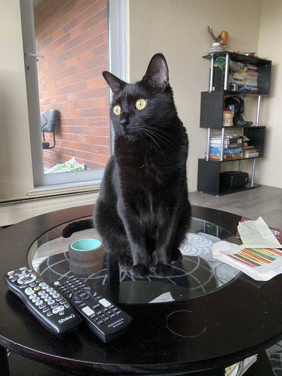 Replying to @asbinvancity: @BitchestheCat My cat Seven