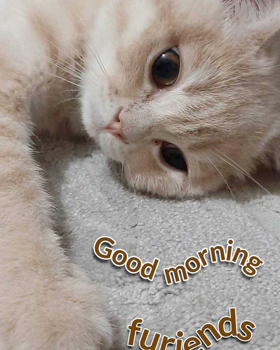 Good morning friends 🌻❤️💓 #GoodMorningTwitterWorld