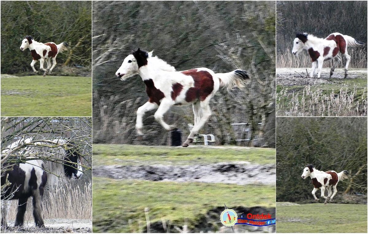 Dartel veulen voor het betere #lentegevoel - #spring is in the air 😉 #DenHelder #Goedemorgen #veulen #horse #animals #lente #DikkeDonderdagKnuffel #thursdayvibes