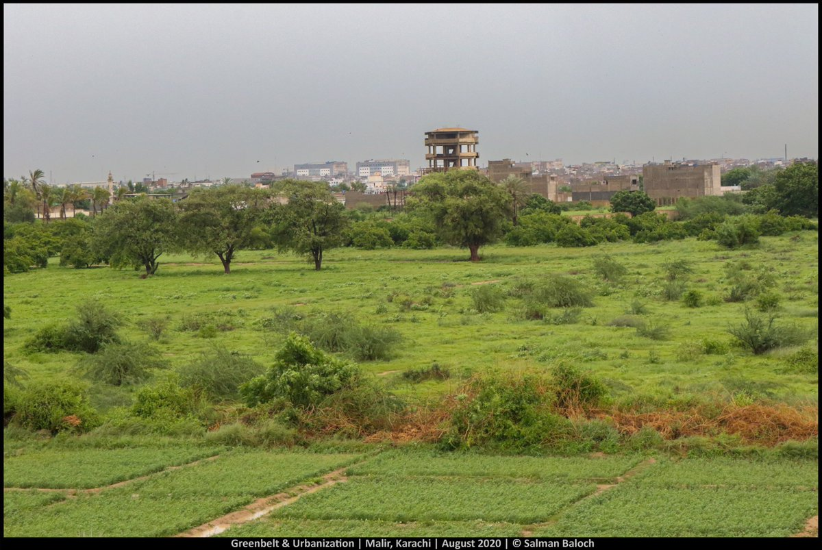 Greenbelt & Urbanization a #photospeak #Malir #Karachi  I took this photo from my roof top rainy days of Aug-20. The force of #urbanization on remaining #Greenbelt of Karachi is visible (view full screen) #Nature #GreenKarachi #Green #ProtectNature #Oxygen