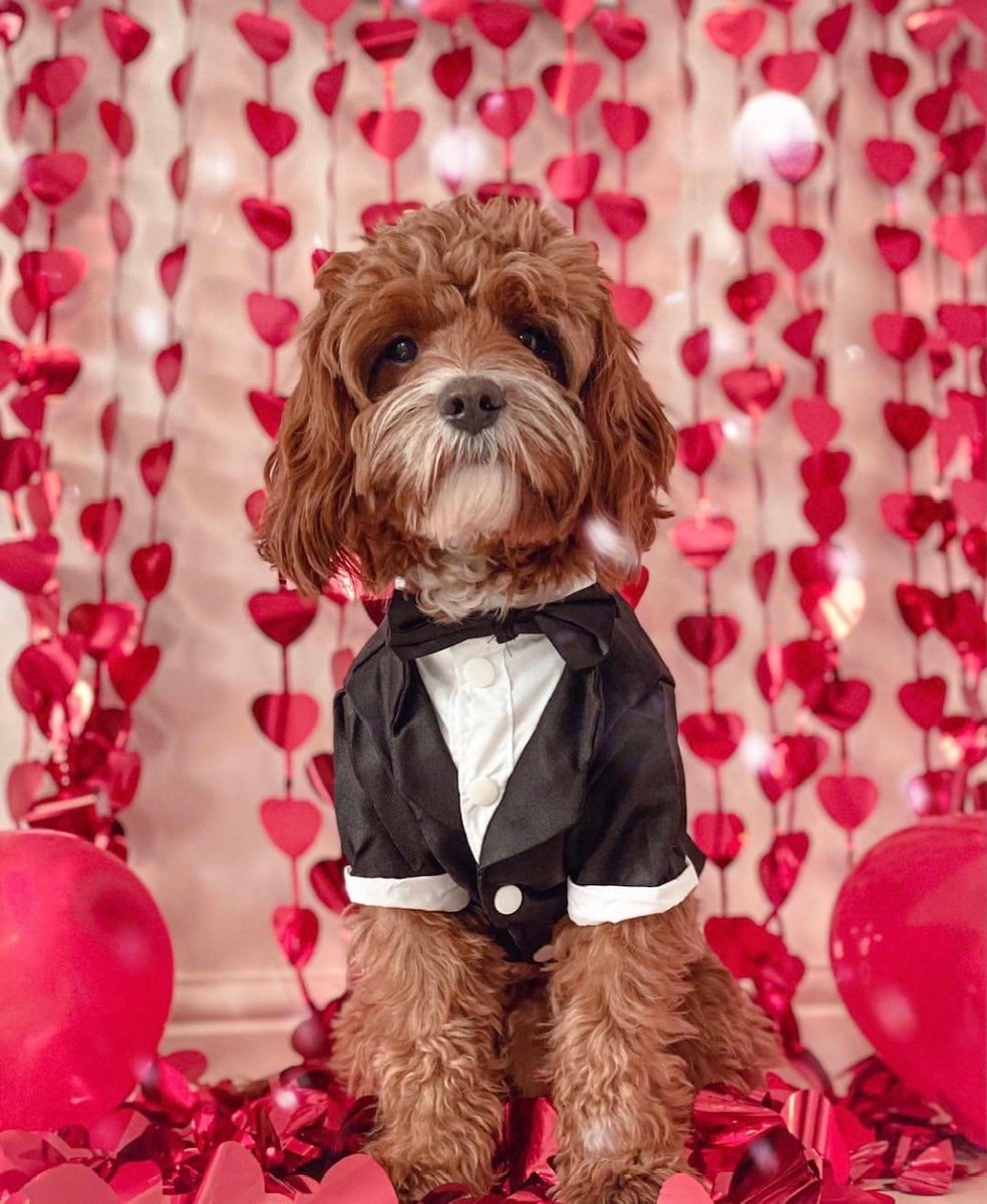Young people and staff at Willow Bridge have been celebrating #NationalLoveYourPetDay with Remy, who has had a great time dressing up a photoshoot.  Remy looks so great, we can't pick a favourite, can you?