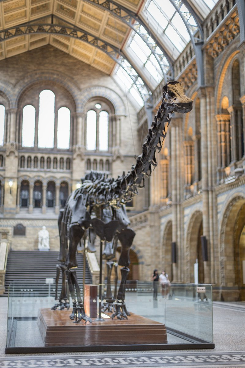 This is such exciting news @Nrw_Cathedral - we cannot wait to meet Dippy! 🦕
