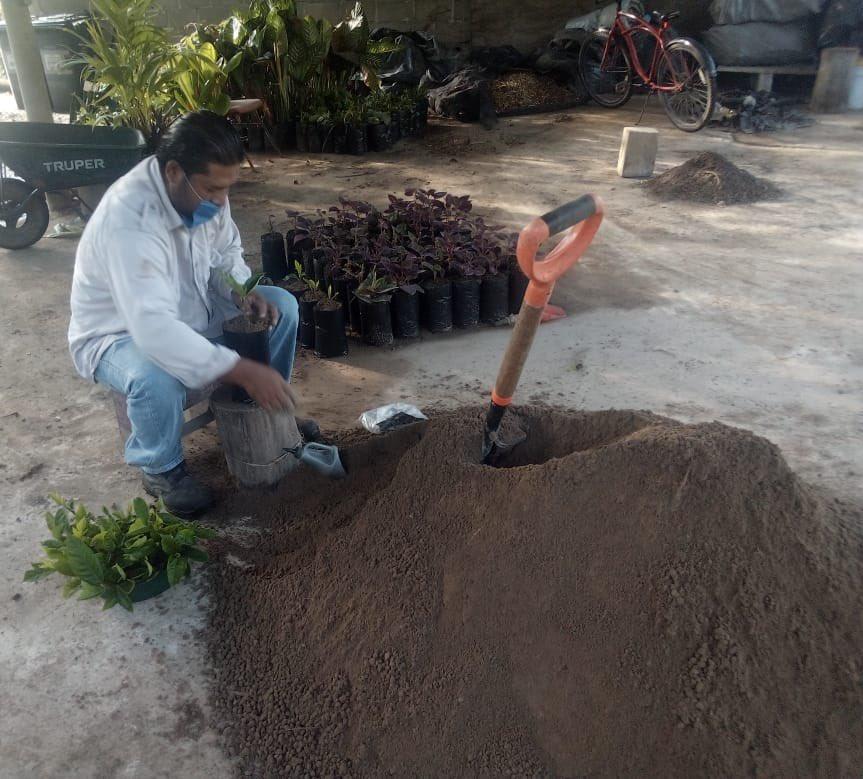 """Transplante de plantulas en el Vivero """"El Dorado"""". https://t.co/2YSbJFbOSe"""