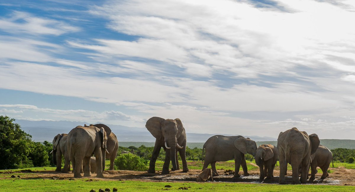 Visit Addo Elephant National Park 🐘 which is also home to other animals such as buffalos, lions, leopards and rhinos, as well as sea-dwelling animals like Great White sharks and Southern Right whales.