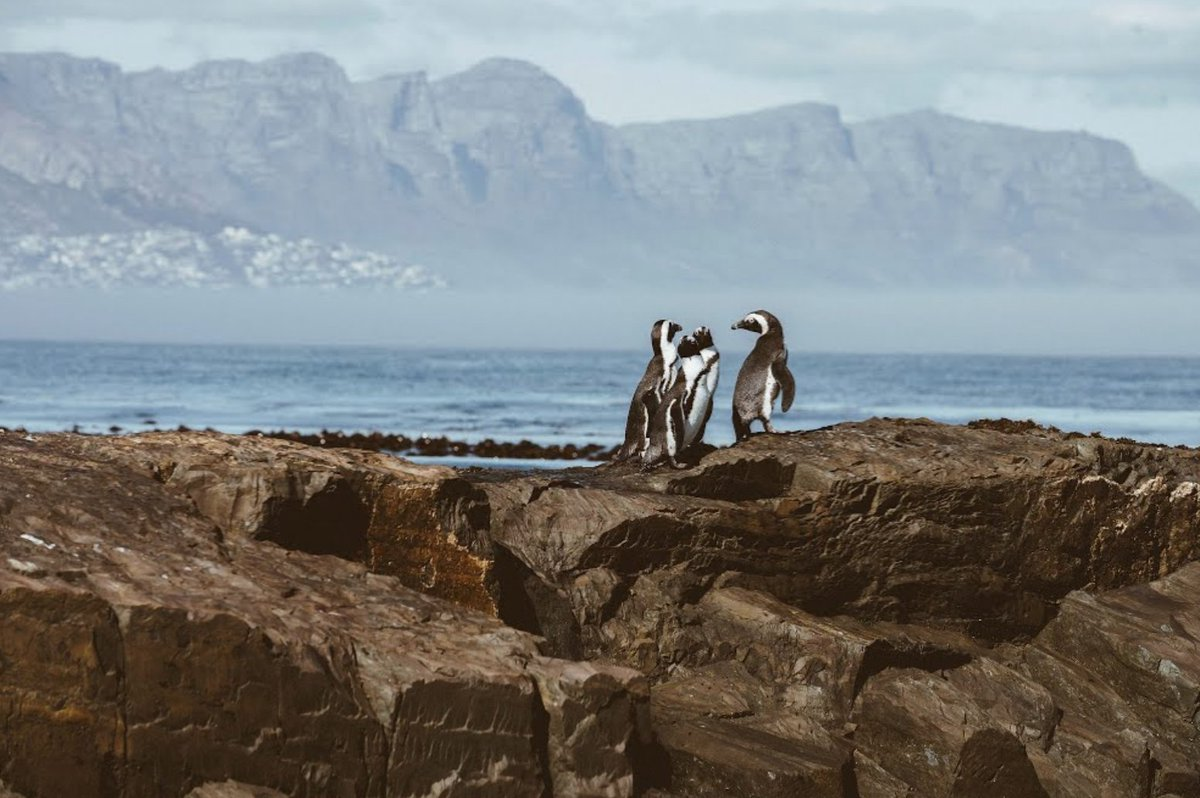 Go birdwatching 🐧  #DidYouKnow that The Cape of Good Hope is home to at least 250 species of birds including one of the two mainland colonies of African penguins?