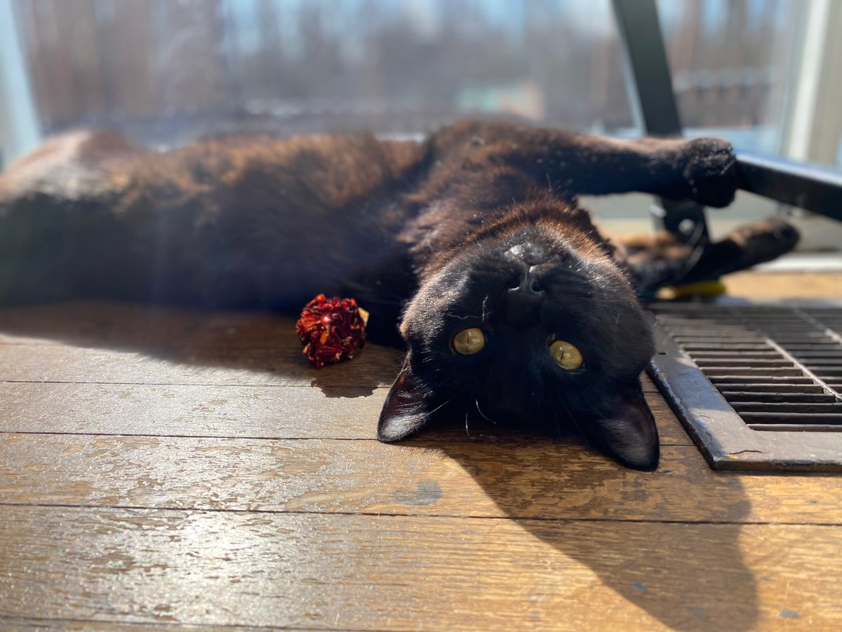 It's Thursday! Here's an out-of-focus Mori for you all ♥️ bathing in the sun like a true panther 🐾  #CatsOfTwitter #thursdaymorning