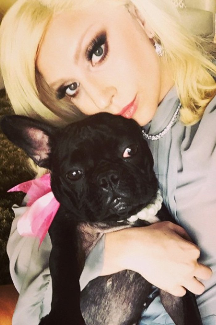 say a little prayer today for Lady Gaga, her friend / dog-walker Ryan Fischer, and her dogs today
