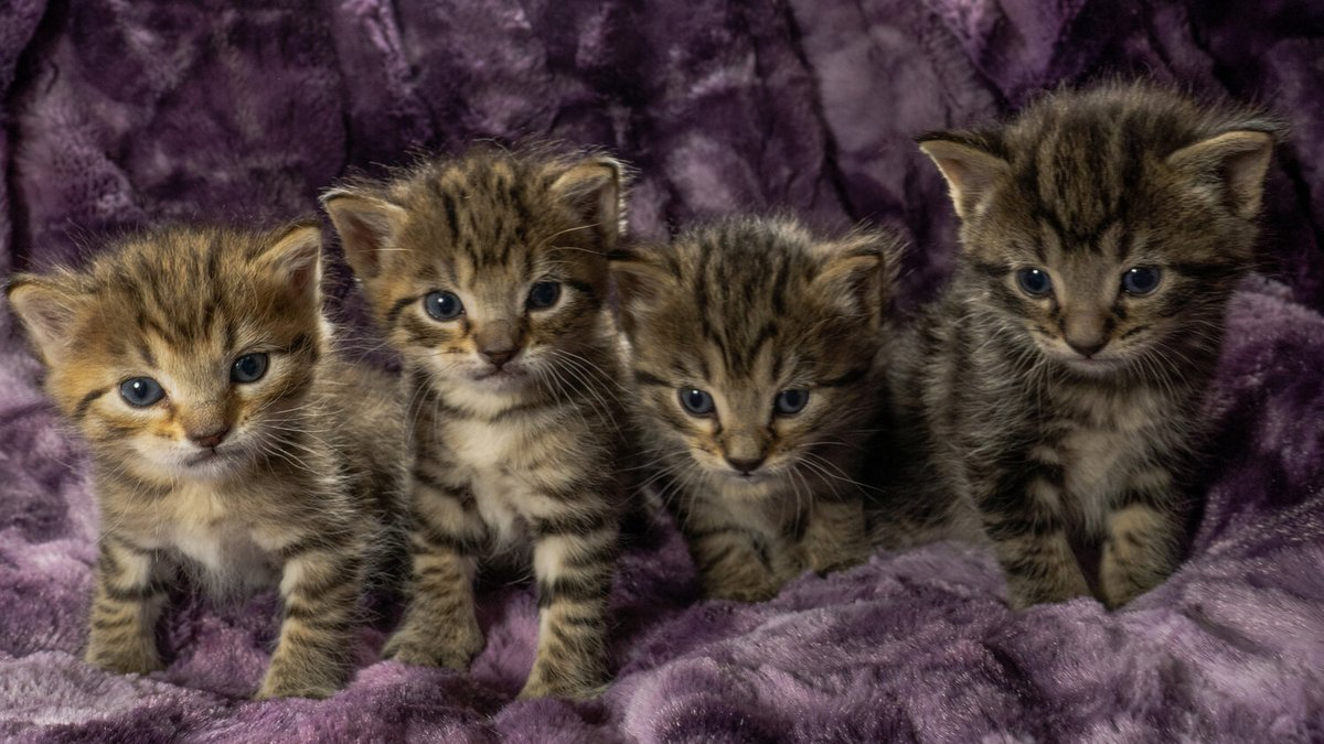OK fine. theyre actually four separate kittens.