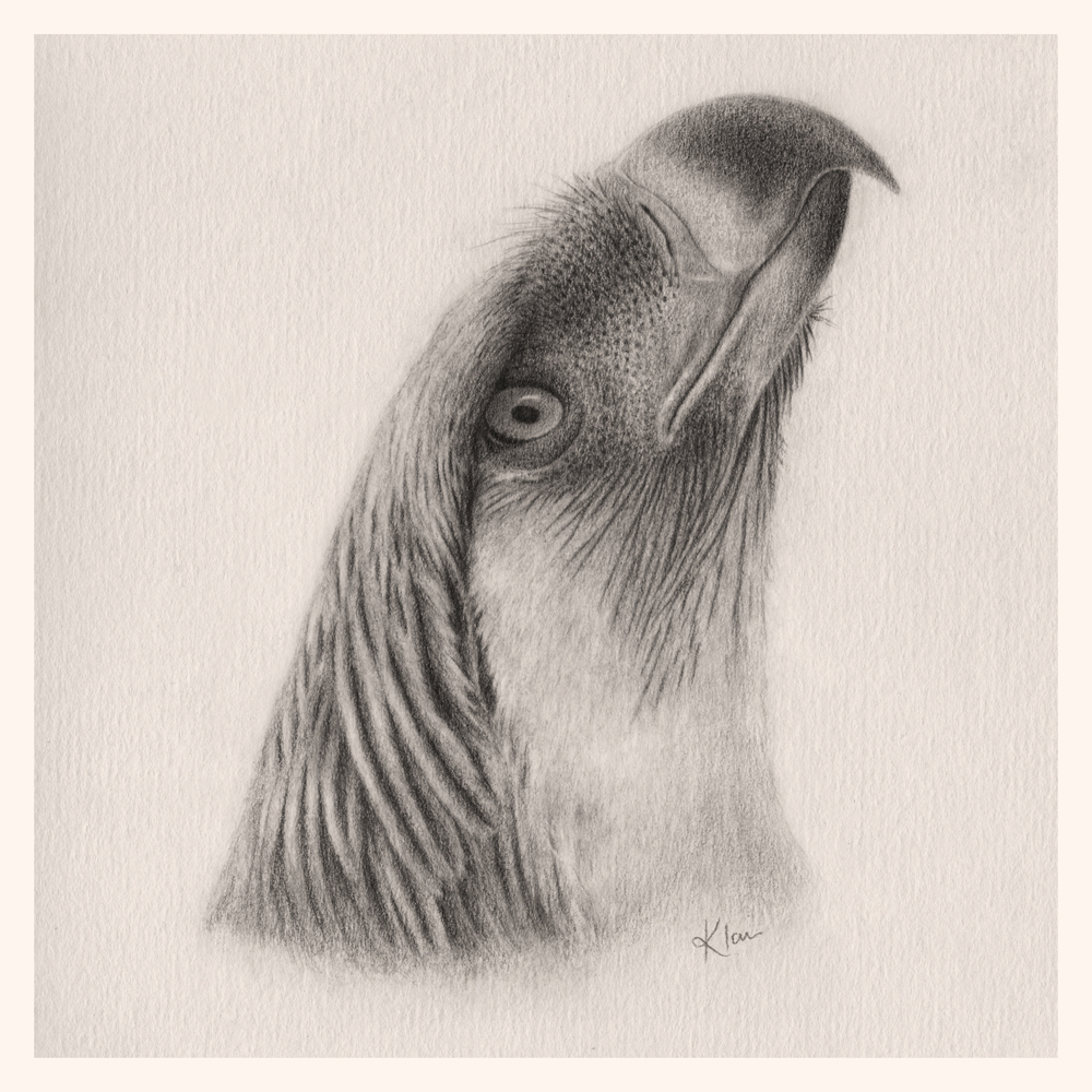 #FlockOfArtists Oh my gosh - how did I miss the Best. Tag. Ever. I'm Klair and I draw murder birbs!