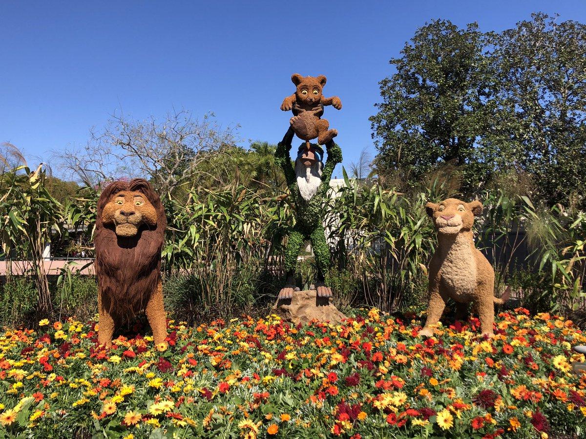#ライオンキング のトピアリーは今年、フューチャーワールドに引っ越しました。 しかも勢揃いしです。  #海外ディズニー #ディズニーワールド #エプコット