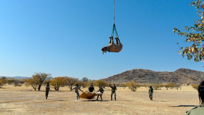 upside down rhino hanging from out of frame helicopter
